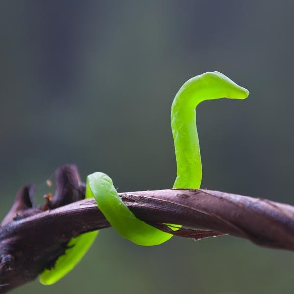 some slithering stories on world snake day sciencelens
