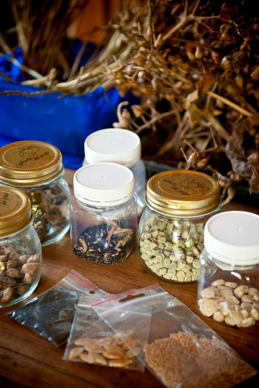 Harvest quality seeds from your vege patch this year - it's all the currency you need to source great seeds from your next seed swap.(© All Rights Reserved)