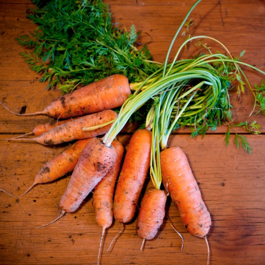Nothing like a crop of fresh, healthy carrots straight from the vege patch.(© All Rights Reserved)
